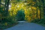 Winding Road in Backbone State Park, near Dundee, Delaware County, Iowa
