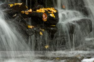 Fall Colors:  Anticipation