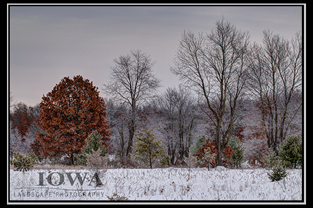 Frost on trees in winter, Newago County, Michigan